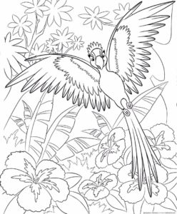 Попугай раскраска картинки раскраски (13)