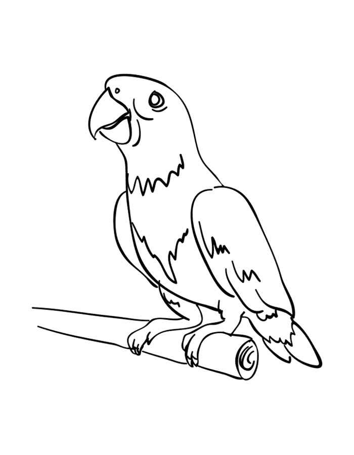 картинки попугаев шаблоны