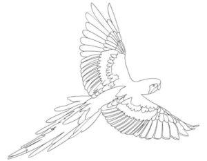 Попугай раскраска картинки раскраски (15)