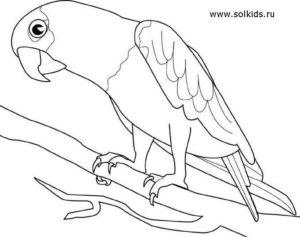 Попугай раскраска картинки раскраски (16)