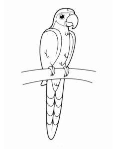 Попугай раскраска картинки раскраски (5)