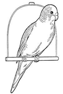 -раскраска-картинки-раскраски-9-202x300 Попугай ара