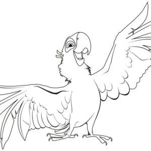 Попугай раскраски