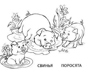 Поросенок картинки раскраски (6)