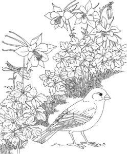 Птицы жаворонок картинки раскраски (1)