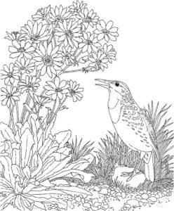 Птицы жаворонок картинки раскраски (11)