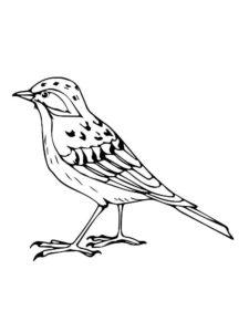 Птицы жаворонок картинки раскраски (12)