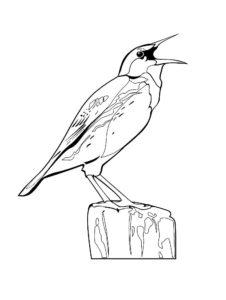 Птицы жаворонок картинки раскраски (16)
