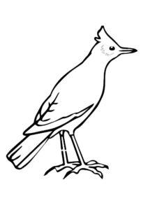 Птицы жаворонок картинки раскраски (7)