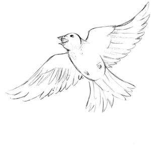 -жаворонок-картинки-раскраски-8-300x291 Птицы жаворонок