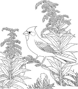 -жаворонок-картинки-раскраски-9-263x300 Птицы жаворонок