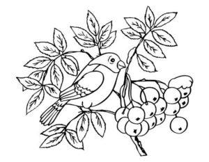 Птицы зимой картинки раскраски (1)