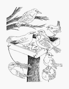Птицы зимой картинки раскраски (4)