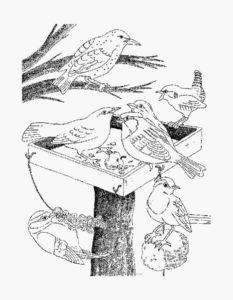-зимой-картинки-раскраски-4-233x300 Птицы зимой
