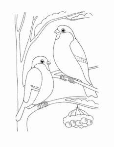 Птицы зимой картинки раскраски (5)