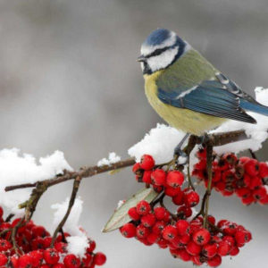 Птицы зимой раскраски