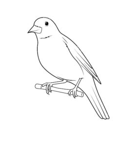 Птицы соловей картинки раскраски (13)