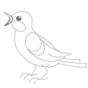 Птицы соловей картинки раскраски (4)
