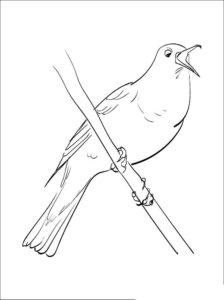 Птицы соловей картинки раскраски (5)