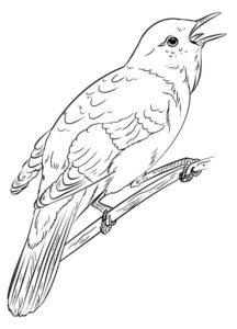 Птицы соловей картинки раскраски (7)