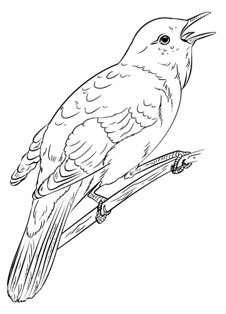 Рисованного картинки рисованного соловья
