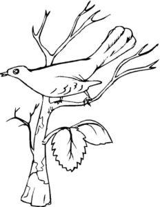 Птицы соловей картинки раскраски (8)