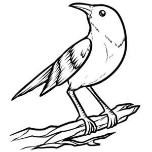 Птицы соловей картинки раскраски (9)