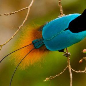 Птицы раскраски