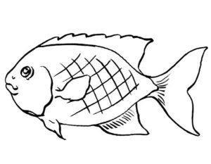 Рыбки картинки раскраски (1)