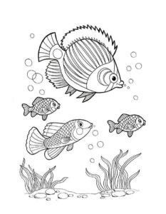 Рыбки картинки раскраски (10)