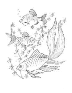 Рыбки картинки раскраски (4)