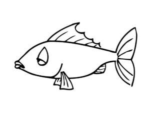 Рыбки картинки раскраски (6)