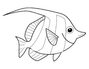 Рыбки картинки раскраски (7)
