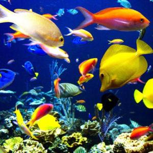 Рыбки раскраски