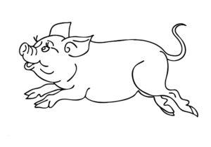 Свинья картинки раскраски (1)