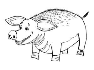 Свинья картинки раскраски (15)
