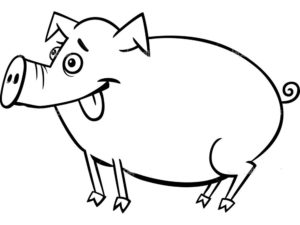 Свинья картинки раскраски (16)