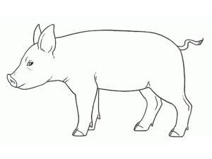 Свинья картинки раскраски (20)