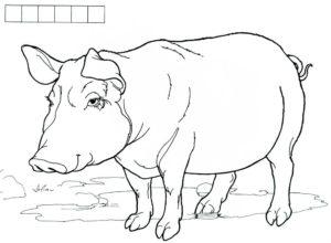 Свинья картинки раскраски (21)