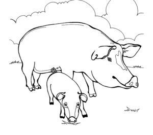 Свинья картинки раскраски (29)