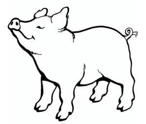 Свинья картинки раскраски (3)