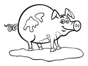 Свинья картинки раскраски (30)