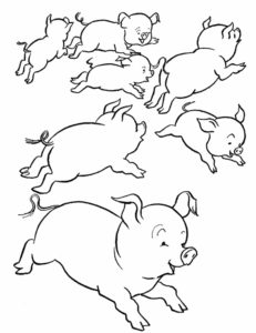 Свинья картинки раскраски (35)