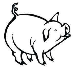 Свинья картинки раскраски (36)