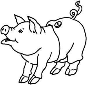 Свинья картинки раскраски (38)