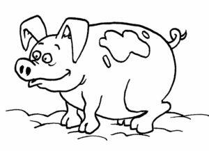 Свинья картинки раскраски (39)