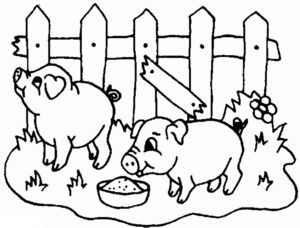 Свинья картинки раскраски (52)