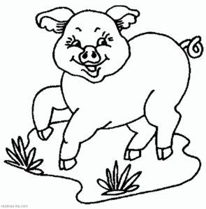 Свинья картинки раскраски (58)