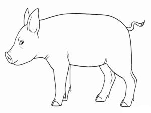 Свинья картинки раскраски (59)