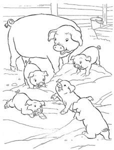 Свинья картинки раскраски (61)